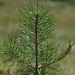 Wald-Kiefer