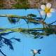 Haarblättriger Wasser-Hahnenfuß