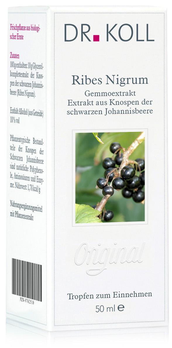 Gemmoextrakt: Ribes nigrum - schwarze Johannisbeere