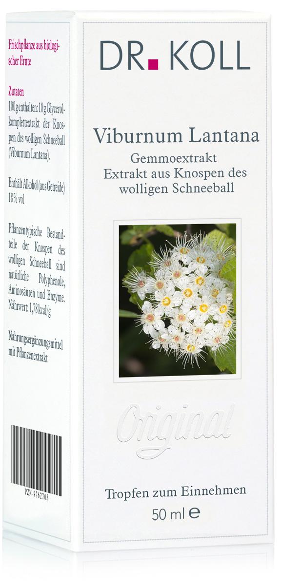 Dr. Koll Gemmoextrakt: Wolliger Schneeball – Viburnum Lantana