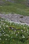 """Stern-Narzisse - Narcissus radiiflorus; Bildquelle: <a href=""""https://www.pflanzen-deutschland.de/quellen.php?bild_quelle=Wikipedia User Hiku2"""">Wikipedia User Hiku2</a>; Bildlizenz: <a href=""""https://creativecommons.org/licenses/by-sa/3.0/deed.de"""" target=_blank title=""""Namensnennung - Weitergabe unter gleichen Bedingungen 3.0 Unported (CC BY-SA 3.0)"""">CC BY-SA 3.0</a>; <br>Wiki Commons Bildbeschreibung: <a href=""""https://commons.wikimedia.org/wiki/File:Narcissus_radiiflorus_(14128175220).jpg"""" target=_blank title=""""https://commons.wikimedia.org/wiki/File:Narcissus_radiiflorus_(14128175220).jpg"""">https://commons.wikimedia.org/wiki/File:Narcissus_radiiflorus_(14128175220).jpg</a>"""