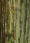"""Rot-Eiche - Quercus rubra; Bildquelle: <a href=""""https://www.pflanzen-deutschland.de/quellen.php?bild_quelle=Wikipedia User Krucku"""">Wikipedia User Krucku</a>; Bildlizenz: <a href=""""https://creativecommons.org/licenses/by-sa/3.0/deed.de"""" target=_blank title=""""Namensnennung - Weitergabe unter gleichen Bedingungen 3.0 Unported (CC BY-SA 3.0)"""">CC BY-SA 3.0</a>; <br>Wiki Commons Bildbeschreibung: <a href=""""https://commons.wikimedia.org/wiki/File:Quercus_rubra_-_cortex.jpg"""" target=_blank title=""""https://commons.wikimedia.org/wiki/File:Quercus_rubra_-_cortex.jpg"""">https://commons.wikimedia.org/wiki/File:Quercus_rubra_-_cortex.jpg</a>"""