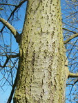 "Sal-Weide - Salix caprea; Bildquelle: <a href=""https://www.pflanzen-deutschland.de/quellen.php?bild_quelle=Wikipedia User Willow"">Wikipedia User Willow</a>; Bildlizenz: <a href=""https://creativecommons.org/licenses/by-sa/2.5/deed.de"" target=_blank title=""Namensnennung - Weitergabe unter gleichen Bedingungen 2.5 Unported (CC BY-SA 2.5)"">CC BY 2.5</a>; <br>Wiki Commons Bildbeschreibung: <a href=""https://commons.wikimedia.org/wiki/File:Salix_caprea_008.jpg"" target=_blank title=""https://commons.wikimedia.org/wiki/File:Salix_caprea_008.jpg"">https://commons.wikimedia.org/wiki/File:Salix_caprea_008.jpg</a>"