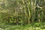 """Gewöhnliche Mehlbeere - Sorbus aria; Bildquelle: <a href=""""https://www.pflanzen-deutschland.de/quellen.php?bild_quelle=Wikipedia User Jean-Pol GRANDMONT"""">Wikipedia User Jean-Pol GRANDMONT</a>; Bildlizenz: <a href=""""https://creativecommons.org/licenses/by-sa/3.0/deed.de"""" target=_blank title=""""Namensnennung - Weitergabe unter gleichen Bedingungen 3.0 Unported (CC BY-SA 3.0)"""">CC BY-SA 3.0</a>; <br>Wiki Commons Bildbeschreibung: <a href=""""https://commons.wikimedia.org/wiki/File:Sorbus_aria_JPG1b.jpg"""" target=_blank title=""""https://commons.wikimedia.org/wiki/File:Sorbus_aria_JPG1b.jpg"""">https://commons.wikimedia.org/wiki/File:Sorbus_aria_JPG1b.jpg</a>"""