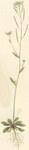 "Acker-Schmalwand - Arabidopsis thaliana; Bildquelle: <a href=""https://www.pflanzen-deutschland.de/quellen.php?bild_quelle=Wikipedia User Farbenfreude"">Wikipedia User Farbenfreude</a>; Bildlizenz: <a href=""https://creativecommons.org/licenses/publicdomain/deed.de"" target=_blank title=""Public Domain"">Public Domain</a>;"