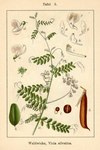 "Wald-Wicke - Vicia sylvatica; Bildquelle: <a href=""https://www.pflanzen-deutschland.de/quellen.php?bild_quelle=Deutschlands Flora in Abbildungen 1796"">Deutschlands Flora in Abbildungen 1796</a>; Bildlizenz: <a href=""https://creativecommons.org/licenses/publicdomain/deed.de"" target=_blank title=""Public Domain"">Public Domain</a>;"