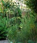 """Land-Reitgras - Calamagrostis epigejos; Bildquelle: <a href=""""https://www.pflanzen-deutschland.de/quellen.php?bild_quelle=Wikipedia User Drahkrub"""">Wikipedia User Drahkrub</a>; Bildlizenz: <a href=""""https://creativecommons.org/licenses/by-sa/3.0/deed.de"""" target=_blank title=""""Namensnennung - Weitergabe unter gleichen Bedingungen 3.0 Unported (CC BY-SA 3.0)"""">CC BY-SA 3.0</a>; <br>Wiki Commons Bildbeschreibung: <a href=""""https://commons.wikimedia.org/wiki/File:Calamagrostis_epigejos-(dkrb)-1.jpg"""" target=_blank title=""""https://commons.wikimedia.org/wiki/File:Calamagrostis_epigejos-(dkrb)-1.jpg"""">https://commons.wikimedia.org/wiki/File:Calamagrostis_epigejos-(dkrb)-1.jpg</a>"""