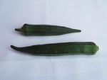 "Okra - Abelmoschus esculentus; Bildquelle: <a href=""https://www.pflanzen-deutschland.de/quellen.php?bild_quelle=Wikipedia User Yercaud-elango"">Wikipedia User Yercaud-elango</a>; Bildlizenz: <a href=""https://creativecommons.org/licenses/by/4.0/deed.de"" target=_blank title=""Namensnennung 4.0 International (CC BY 4.0)"">CC BY 4.0</a>; <br>Wiki Commons Bildbeschreibung: <a href=""https://commons.wikimedia.org/wiki/File:Abelmoschus_esculentus-1-yercaud-salem-India.JPG"" target=_blank title=""https://commons.wikimedia.org/wiki/File:Abelmoschus_esculentus-1-yercaud-salem-India.JPG"">https://commons.wikimedia.org/wiki/File:Abelmoschus_esculentus-1-yercaud-salem-India.JPG</a>"