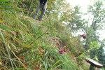 """Rispen-Flockenblume - Centaurea stoebe; Bildquelle: <a href=""""https://www.pflanzen-deutschland.de/quellen.php?bild_quelle=Wikipedia User Sporti"""">Wikipedia User Sporti</a>; Bildlizenz: <a href=""""https://creativecommons.org/licenses/by-sa/3.0/deed.de"""" target=_blank title=""""Namensnennung - Weitergabe unter gleichen Bedingungen 3.0 Unported (CC BY-SA 3.0)"""">CC BY-SA 3.0</a>; <br>Wiki Commons Bildbeschreibung: <a href=""""https://commons.wikimedia.org/wiki/File:Centaurea_rhenana_t2.JPG"""" target=_blank title=""""https://commons.wikimedia.org/wiki/File:Centaurea_rhenana_t2.JPG"""">https://commons.wikimedia.org/wiki/File:Centaurea_rhenana_t2.JPG</a>"""