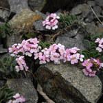 Steintäschel
