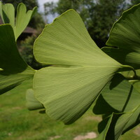 besondere Pflanzen