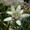 Alpenpflanze