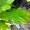 Laubbaum