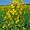 Ölpflanze