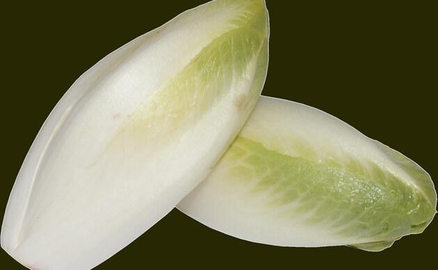 <b>Chicorée, Radicchio - <i>Cichorium intybus var. foliosum</i></b>
