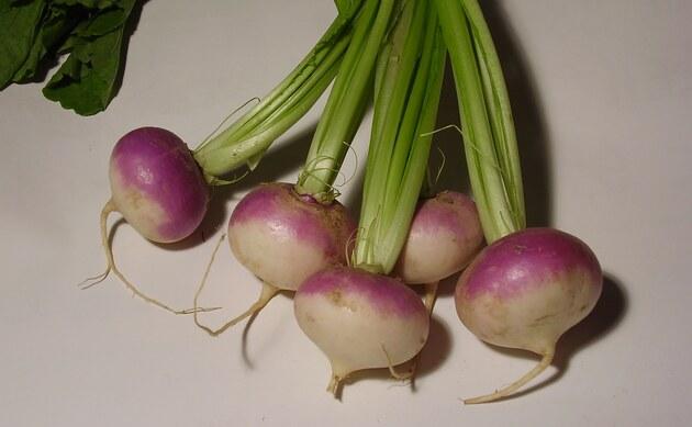 <b>Speiserübe - <i>Brassica rapa var. rapa</i></b>