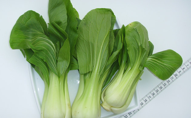 <b>Pok Choi - <i>Brassica rapa chinensis</i></b>