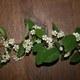 Vielblütige Zwergmispel - Cotoneaster multiflorus