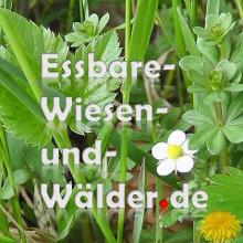 essbare-wiesen-und-waelder.de