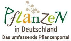 Pflanzen in Deutschland - Das umfassende Pflanzenportal für die heimische Flora von Deutschlan