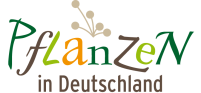 Pflanzen in Deutschland - Das umfassende Pflanzenportal für die heimische Flora